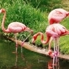 Pretty Flamingo Karaoke Manfred Mann